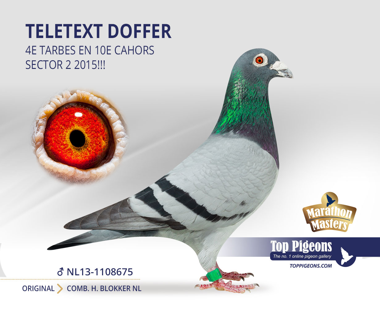 exquisite design buying cheap various styles Now at TopPigeons: Total sale Old Pigeons Comb. H. Blokker ...